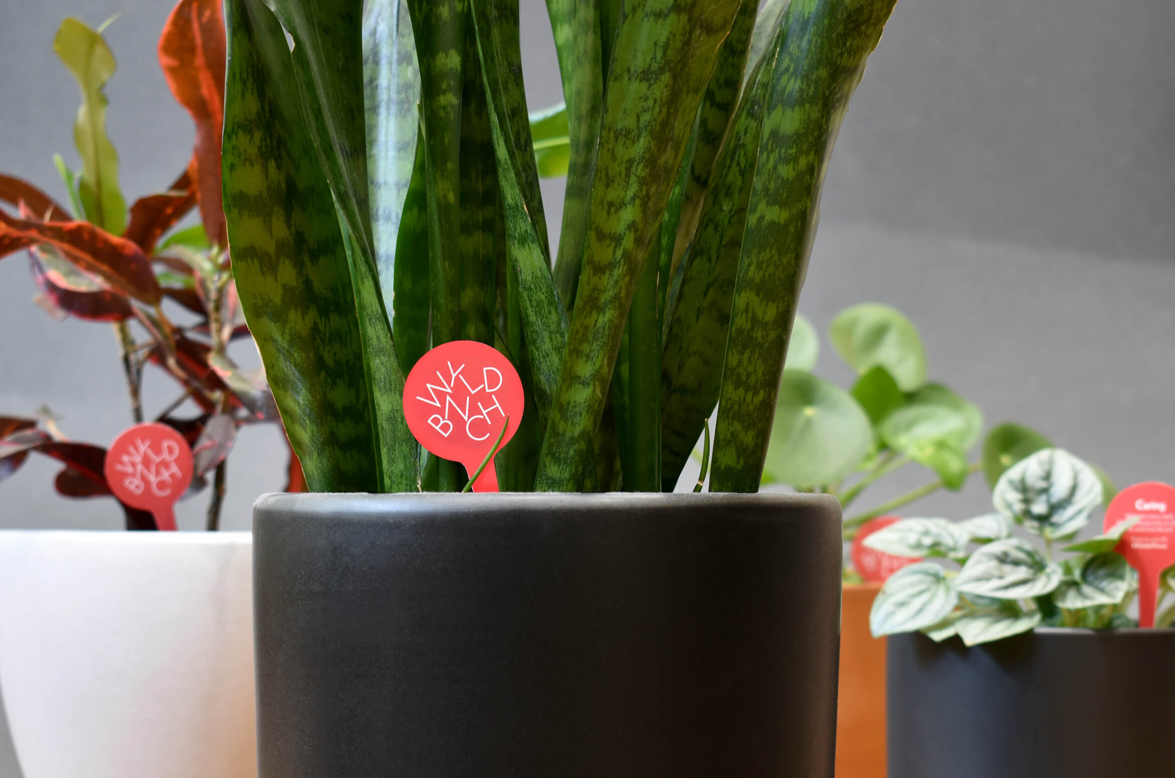 Branded plants stakes in potted plants.